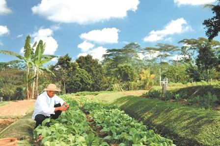 08_9 Organic farm.jpg