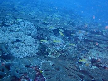 ペニダ島マンタポイントファンダイビングの画像10