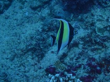 ペニダ島マンタポイントファンダイビングの画像11