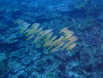 ペニダ島マンタポイントファンダイビングの画像12