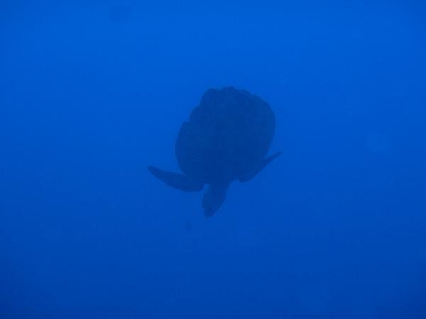 ペニダ島マンタポイントファンダイビングの画像14