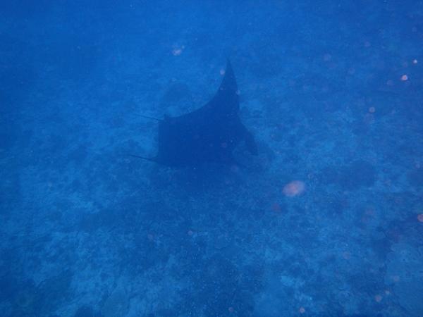 ペニダ島マンタポイントファンダイビングの画像15