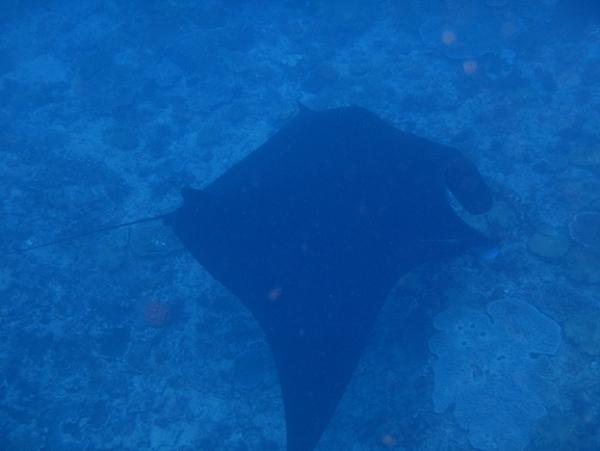 ペニダ島マンタポイントファンダイビングの画像16