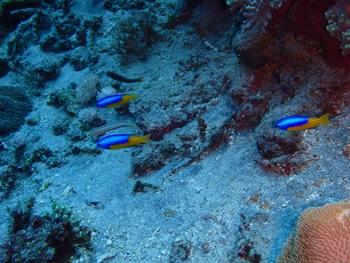 ペニダ島マンタポイントファンダイビングの画像21