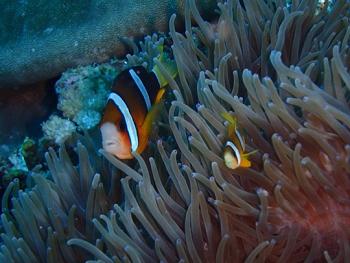 ペニダ島マンタポイントファンダイビングの画像22