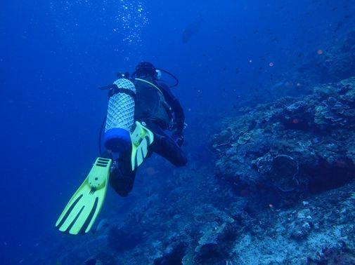 ペニダ島マンタポイントファンダイビングの画像24