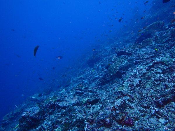 ペニダ島マンタポイントファンダイビングの画像25