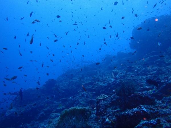 ペニダ島マンタポイントファンダイビングの画像26