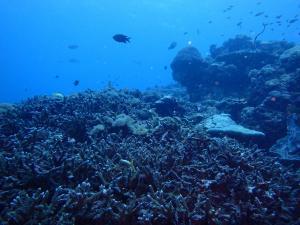 ペニダ島マンタポイントファンダイビング
