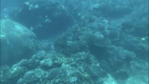 透明度の高いビーチで遊ぶならバリ島を飛び出してレンボンガン島へGO!