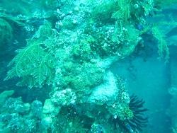 トゥランベンの海の中は、とってもダイナミック