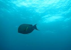 小さな魚と大きな魚。どっちも悠然と自分のペースで泳いでます
