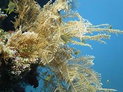 色鮮やかな海の生き物